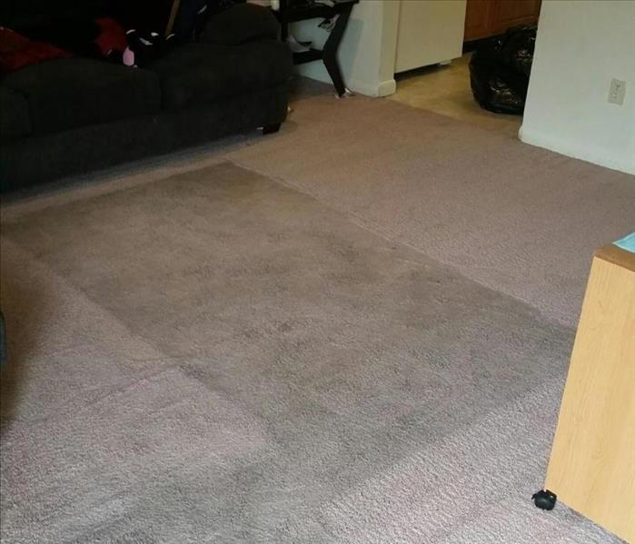 Carpet cleaning in Parkville/Carney, Maryland Before