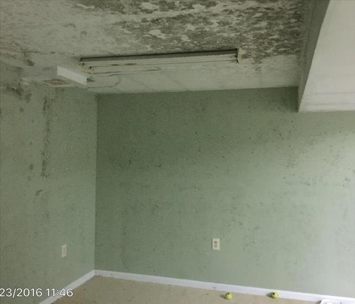Mold growth takes over entire room in Baltimore County, Maryland Home